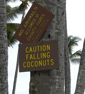 poccoconuts